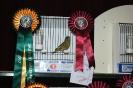 Austin Cutajar 3rd Best Greenfinch_1