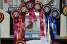 William Rutzen Best Greenfinch Hen, Best Unflighted, Best Greenfinch Unflighted, Best European Finch, Best Greenfinch _1